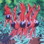 My Flowers My Land - Craig Pickett